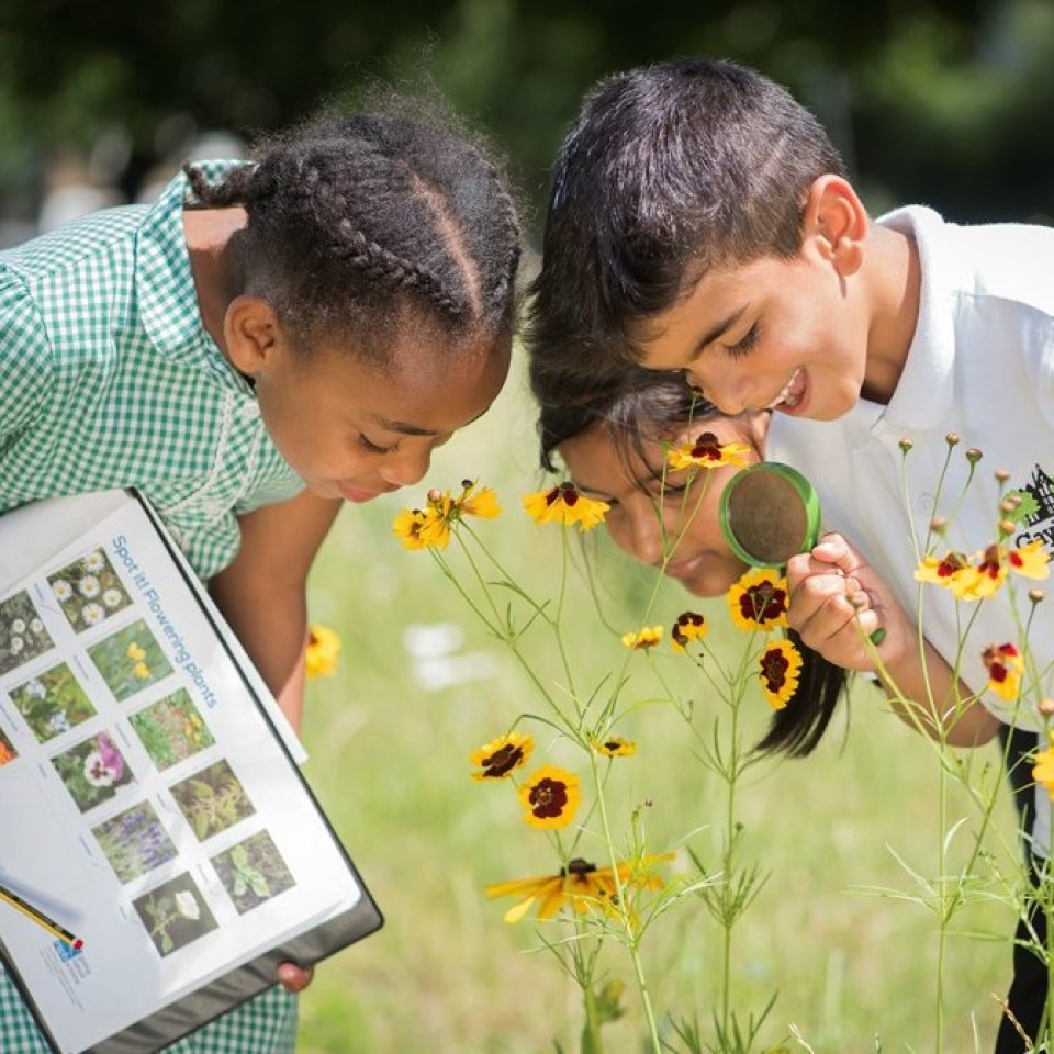 children looking at flowers through a microscope